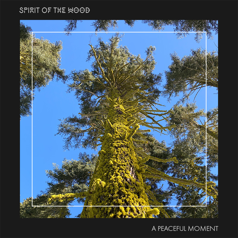 Spirit of the Wood - A Peaceful Moment - Single Artwork